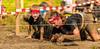 Crawling through the mud. (Alex-de-Haas) Tags: 70200mm bootcamprun d750 dutch dutchies geestmerambacht holland langedijk nederland nederlands nikkor nikon noordholland bootcamp candid conquering dirt dirty endurance evenement event familie family fit fitdutchies fitness fun hardlopen joggen jogging mensen modder mud obstacle obstakel overwinnen people plezier recreatie recreation rennen renner renners run runner runners running sport sportief sportiviteit sporty summer team teamspirit teamgeest vies volharding zomer