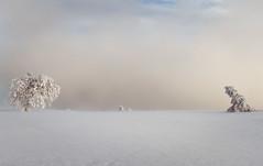 Hornisgrinde (Guido de Kleijn) Tags: hornisgrinde guidodekleijn blackforest schwarzwald nordscharzwald snowscape schnee snow sneeuw seebach schwarzwalderhochstrasse nikond500 nikon1680f28 trees tree cold winter