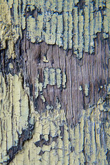 Peeling paint on old wood at Granville Island, Vancouver (elizabatz.jensen) Tags: weathered neglected abstract texture cracked craquelure cracks peelingpaint wood granvilleisland vancouver