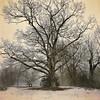 The Oak Tree (lydiacassatt) Tags: hipstamatic