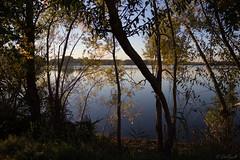 An enchanted place! (Cecilia A) Tags: aquitaine bordeaux france lacdebordeaux lake pond lago étang entardecer tranquilo quietness canon canont3i canon600d ©ceciliaa arvore tree arbre árbol albero
