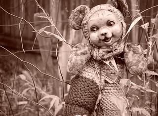 Teddy's been climbing fences