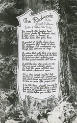 The Redwoods - California (dougdb) Tags: california redwoods