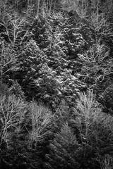 Conkle's Hollow (Stephen A. Wolfe) Tags: 35mm swolfe2000 adobelightroom adobelightroomcc arista400 kodakhc110 nikonfm3a blackandwhite film httpstephenwolfephotography plustek82001 conkleshollow hockinghills ohio trees winter snow