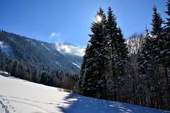 A touch of Christmas in February (echumachenco) Tags: winter snow landscape mountain mountainside pine tree forest wood sun sky blue osterhorngruppe alps hintersee flachgau salzburg austria österreich nikond3100 outdoor