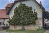 Peaceful coexistence II. (Dieter Meyer) Tags: ochsenhausen oberschwaben badenwürttemberg deutschland landwirtschaft baum haus tree 1982