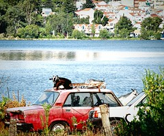 Lada's second life (jimiliop) Tags: cars old abandoned lada goats animals funny argostoli kefalonia sea water sunshine russian car vechile alternative use red rusty town townscape green trees relaxing greece countrylife fauna cartop