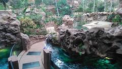 Gran Canaria - Las Palmas- Poema del Mar (bellrockman2011) Tags: canaries islands laspalmas poemadelmar aquarium fish sharks tropical extravaganza sea jungle mantaray axolotl salamander toad crocodile