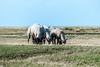 19082017-P1070275 (jlviaud) Tags: aguila fz200 moutons prairie
