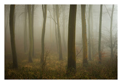 Friston Forest - December 20th (Edd Allen) Tags: forest trees tree treescape mist nikond610 nikon d610 70200mm landscape country countryside atmosphere atmospheric sunrise uk eastsussex woods woodland serene bucolic melancholy foliage leaves fristonforest fog sunlight frost winter