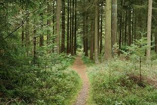 De Spitzbubenweg naar Schneverdingen.