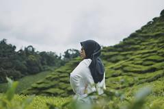 Roadtrip | Cameron Highland (Mr.rie) Tags: tuesdayswithslurpee tuesdayswithna uevolisyana shotondslr nikon dslr 35mm f18 malaysia malaysian cheariee chearie mrrie vsco a7 a8 cameron highland tea garden green