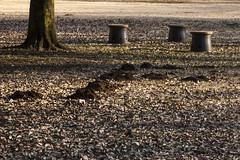A SMALL AIRPORT, SOME PARKS AND CLOUDS - CXXXVIII (Jussi Salmiakkinen (JUNJI SUDA)) Tags: chofu tokyo japan cityscape park wood landscape nogawa 調布 林 森 武蔵野 多摩 東京 日本 風景 公園 野川公園 january winer woods tree 2017 tammikuu molehill