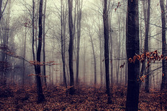 Mist (JuliSonne) Tags: forest trees foliage dark fog foggy mist misty creeps spooky winter mood atmosphere damp drizzly secret mystic