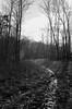 peace of mind (RubyT (I come here for cameradarie)) Tags: adoxsilvermax100 pentaxlx fa43ltd path forest landscape bw bn nb mono monocromo monochrome schwarzweiss noirblanc blancoynegro blackandwhite черноеибелое film analog pentax pentaxart