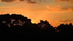 Sunset in Curitiba, Brazil (LuFranci) Tags: sunset brasil curitiba tree araucaria pôrdosol árvore céu entardecer