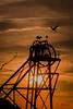 El atardecer de las cigüeñas (Carolina Aparicio Ayora) Tags: cigüeña contraluz atardecer cabria nubes sunset