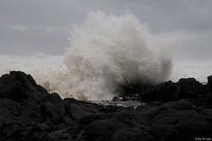 DSC_2043 (rlowe3) Tags: storm cape perpetua sea foam shoreline cooks chasm wave tidal surge oregon coast