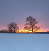 Snowscape Sunrise (S Marwood) Tags: treeline snowy newday northyorkshire morn morning early glow cloud snowscape landscape canon700d yorkshire sun sunup dawn sunrise sky pink white silhouette tree farmland field snowfall snow 2018 january winter aonb howardianhills