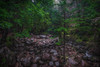 Rain in the forest (paulbnashphotography.com - Sharpe Shooter) Tags: forest scotland rain storm wet scottish wood woodland raining trees tree landscape