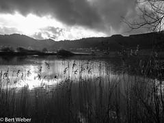 Unbenannt (weber.bert) Tags: vulkaneifel eifel analogefotografie blackwhite inbiancoenero noiretblanc grauwertabstufungen sw