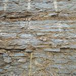 Coral in the upper Greendale Member(?) thumbnail