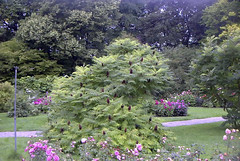 Beautiful bush in the Botanical Garden in Visby Gotland Sweden. (bellrich1941) Tags: visby gotland sweden