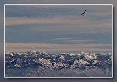 Wilderness (Kike K.) Tags: velebit croatia adriatic sea krk obzova griffon vulture landscape february winter 2018 snow sky clouds light sun sunlight view island walk hiking canon gimp canon70200f4l nature natural rijeka kvarner bird prey cres wings area air freedom fly flight flying north rock stone park heights