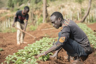 Photos of AVCD programme-Potato work in the North Rift