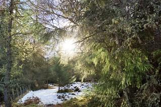 Snowy path through trees.