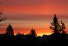 Winter sunrise - Everett, WA USA (Nick Dean1) Tags: cascades cascademountains silhouette westernhemlock hemlock washington washingtonstate washingtonusa sunrise salmonpink everett southeverett ngc