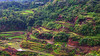 the Ifugao rice terraces….. (Jinky Dabon) Tags: fujifilmfinepixhs35exr riceterraces ricepaddies sagada banaue bontoc ricefield mountain northernphilippines landscape nature rice farmers