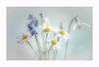 You, my love (Krasne oci) Tags: flowers flowerart spring springtime daisies snowdrops painterly happy love photographicart artistic texturedphoto white blueflower