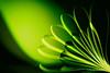 LIGHT-OPIA for Smile on Saturday (Monica Muzzioli) Tags: smileonsaturday lightopia torch green paper doubleexposure