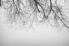 I am Groot (archive 2017) (Toni_V) Tags: m2403056 rangefinder digitalrangefinder messsucher leica leicam mp typ240 type240 28mm elmaritm12828asph hiking wanderung albis fog nebel mist minimalism bw monochrome schwarzweiss blackwhite sep2 silverefexpro2 niksoftware felsenegg zurich zürich kantonzürich groot tree baum switzerland schweiz suisse svizzera svizra europe ©toniv 2017 170218