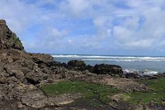 Piha, Auckland, NZ (christineNZ2017) Tags: piha auckland newzealand westauckland waitakere