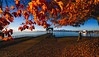 Autumn Color (Photo Alan) Tags: vancouver autumn season water sea building city cityscape cityofvancouver mapleleaves maple red outdoor canada