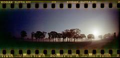 Tagesbeginn (Ulla M.) Tags: selfdeveloped selbstentwickelt sprocketrocket sprocketholes fog nebel analogue analog tetenalcolortec canoscan8800f lomo panoramaformat lomography