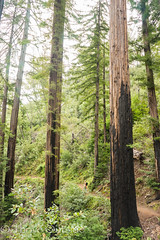 Big Sur edited pics-41 (MufasaPhoto) Tags: backpacking bigsur camping ocean redwoods thrive