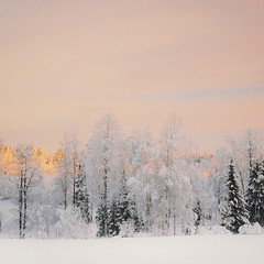 ~ another beautiful day ~  Riddarhyttan, Sweden (Tankartartid) Tags: moln clouds himmel sky soluppgång sunrise winterwonderland skog forest snö träd snow trees vinter winter natur nature norden nordic västmanland riddarhyttan europe sverige sweden instagram ifttt