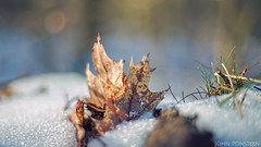 winter (etsie74) Tags: cold winter leave leaves hail snow contra contracolors grass bokeh composition mood moody nature forrest woods light sun bright nunbspeet veluwe beautiful