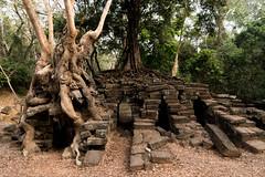 Angkor   |   Tetrameles Roots (JB_1984) Tags: tetrameles tree root stone temple monument light shadow templesofangkor khmer siemreap krongsiemreap cambodia cambodge kampuchea nikon d500 nikond500