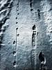 nothing is original (giggie larue) Tags: footprints humanandbeast snow shadowsandlight nightlight nightwalk pghwinter201718 lookingdown metaphor