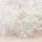 Winter Trees thumbnail