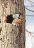 Who's there? (hennessy.barb) Tags: graysquirrel sciuruscarolinensis squirrel home frontdoor mammal smallmammal hello