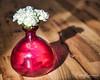 Treat (SoonerChick14) Tags: treat pink flowers cy365 flooring potd white