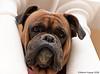 Mirada (Martin Kastar) Tags: perro mirada dog chien animal look