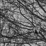 Wasps Nest-HMBT! thumbnail