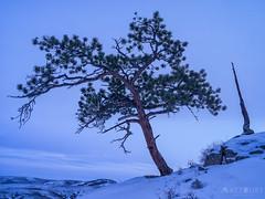 IMGP9909-Edit-2 (Matt_Burt) Tags: hartmanrocks bent dusk juniper old sunset tree winter