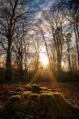 Long Walk Tree Stump (AppleTV.1488) Tags: afternoonwalk bridleway england europe footpath forest gb gbr greatbritain sunshine tree treestump uk walk walking wiltshire wood stype berkshire unitedkingdom longwalk appletv1488 2018 february 23022018 23feb2018 23 panasonicdcgx800 lumixgvario1232f3556 24mmfocallength35mm pm noflash portraitapectratio f16 ¹⁄₁₀secatf16